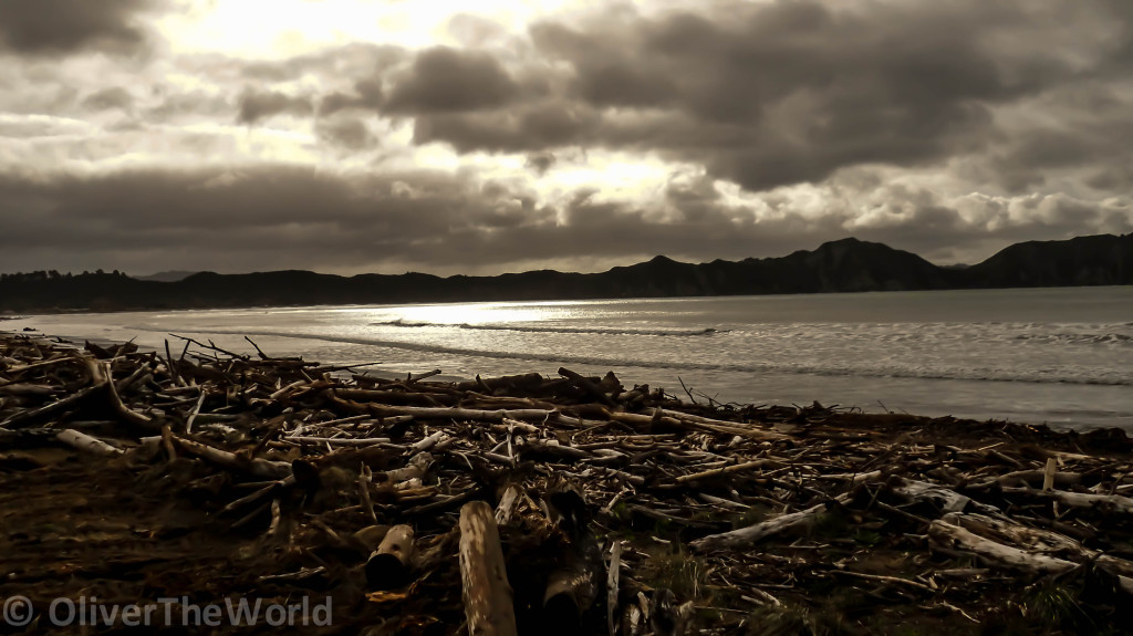East Cape driftwood